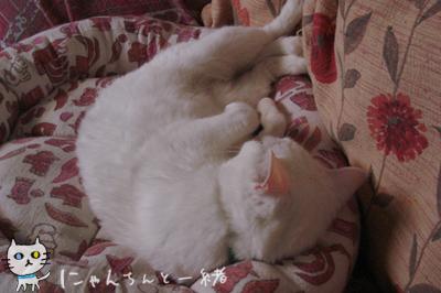 寝姿ゴマちゃん_e0031853_16543483.jpg
