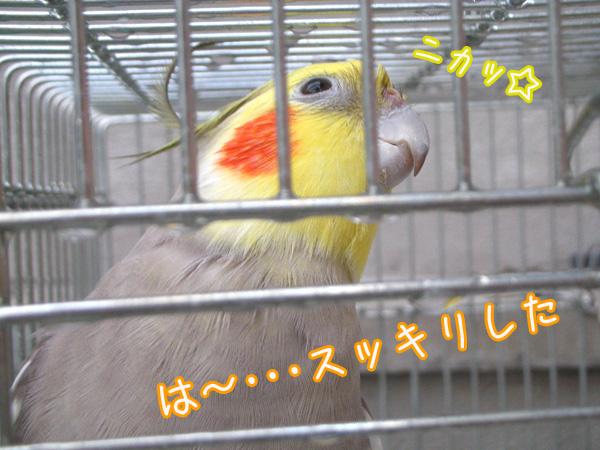 f0132055_930320.jpg