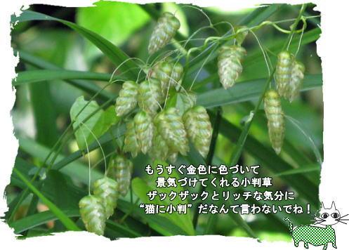 f0137096_1052723.jpg