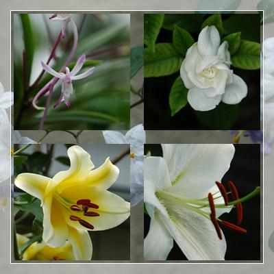庭の花、多摩川の花_c0051105_9105042.jpg