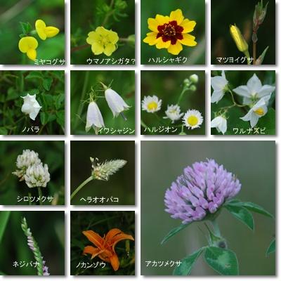 庭の花、多摩川の花_c0051105_912239.jpg