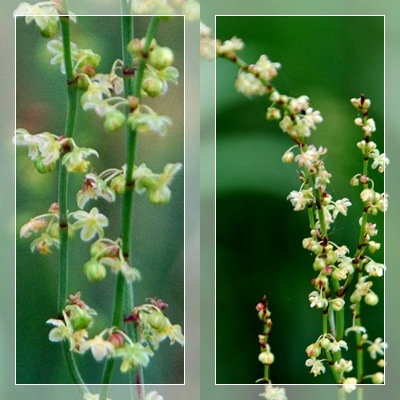庭の花、多摩川の花_c0051105_9401183.jpg