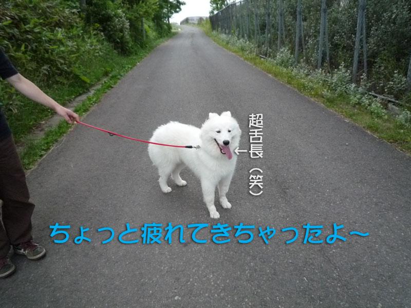 b0146024_16341349.jpg
