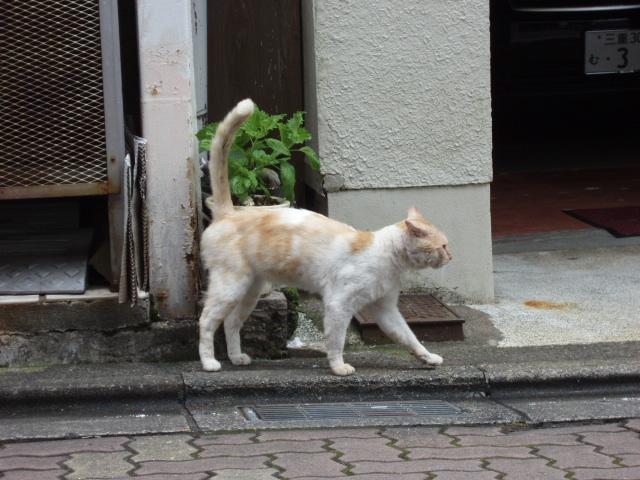 商店街通りの新しいボス猫_c0010936_1127172.jpg