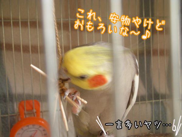 f0132055_8551093.jpg