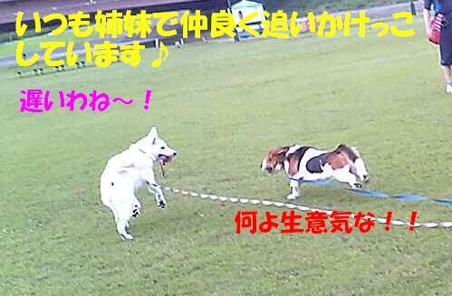 f0121712_22214723.jpg