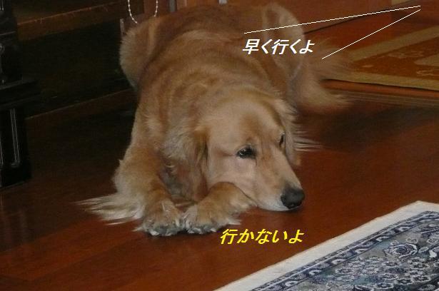 f0114128_2221464.jpg