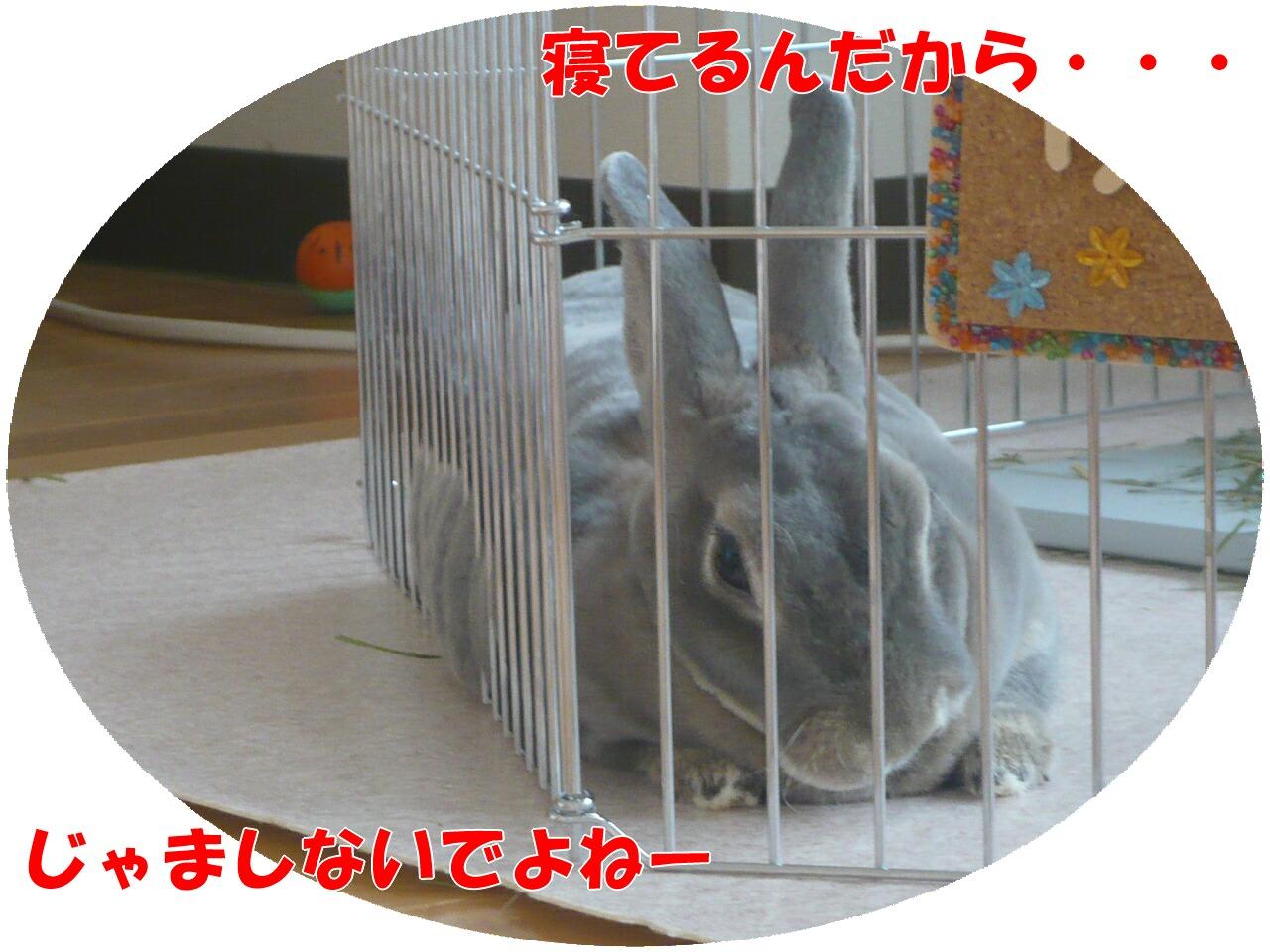 c0151439_1130974.jpg