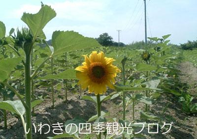 f0105342_14331525.jpg