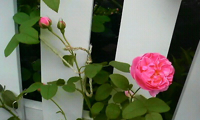 a0014853_7485410.jpg