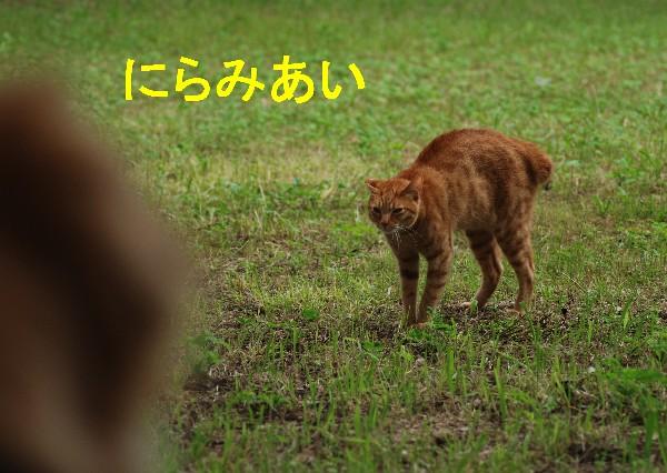 e0020166_20162262.jpg