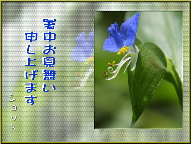 f0164592_8225980.jpg