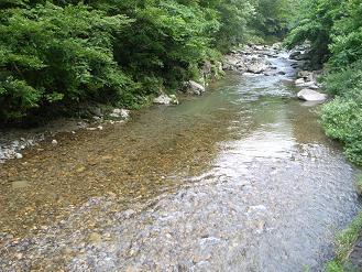 福川川_d0087595_10275737.jpg