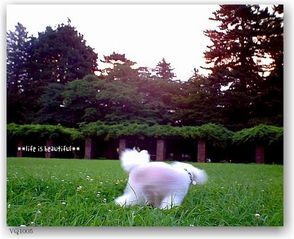 a walk at dusk_d0083623_201672.jpg