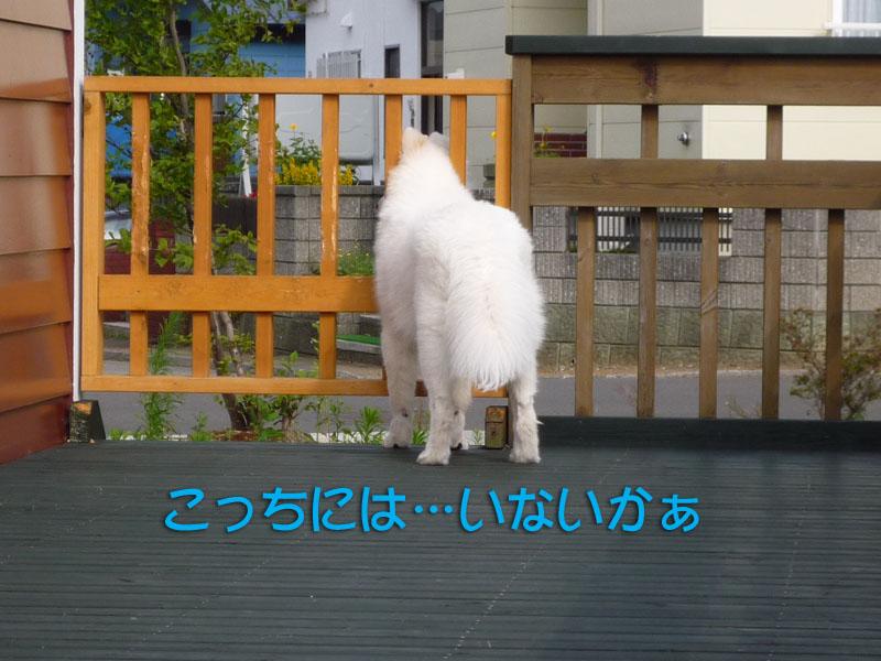 b0146024_1541437.jpg
