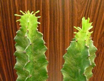 植物日記 Ⅳ   by ヌーヴェルブティック_f0076925_15571763.jpg