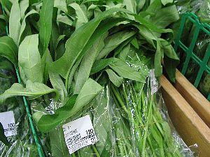 珍しい葉菜_c0141652_17264435.jpg