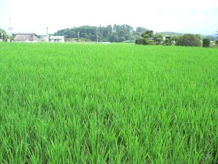 稲の香りのおすそ分け_f0178285_23382377.jpg