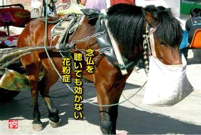 b0092707_68048.jpg