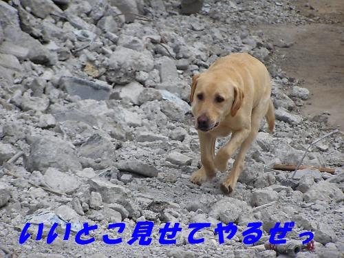 b0067012_5232618.jpg