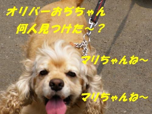 b0067012_536386.jpg