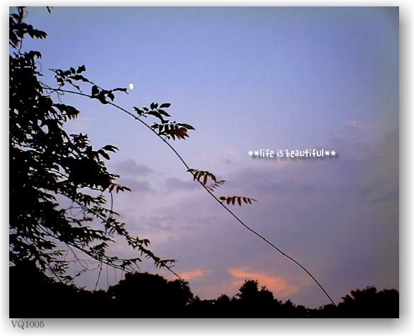 a walk at dusk_d0083623_1295398.jpg