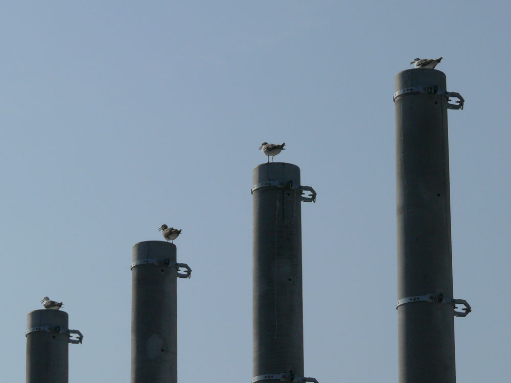後から来た鳥さんに場所を譲る鳥さんが多かったですが、中にはあっち行けーと... 気まぐれデジカメ