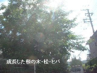 f0031037_1453444.jpg