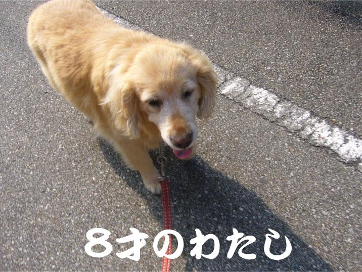 c0085188_16493749.jpg