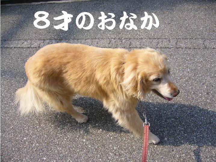 c0085188_1650519.jpg