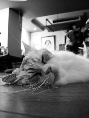 猫カフェの時間_e0015690_10222857.jpg