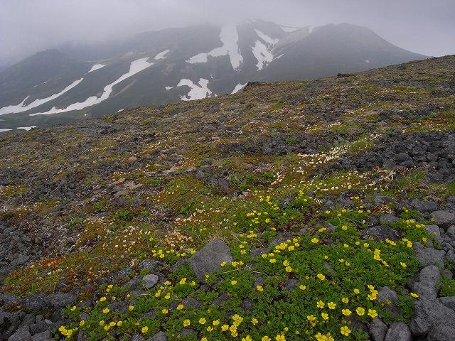 7月8日、北鎮岳から中岳温泉周辺で見た花等_f0138096_12491621.jpg