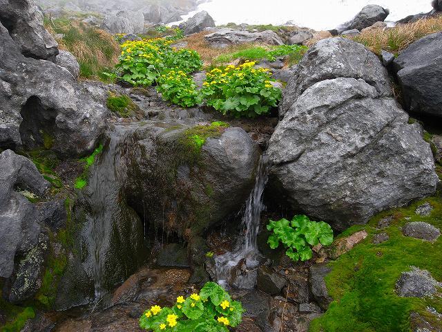 7月8日、北鎮岳から中岳温泉周辺で見た花等_f0138096_12505523.jpg