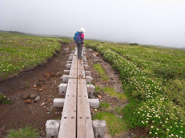 7月8日、旭岳裾合平周辺の花など_f0138096_13235697.jpg
