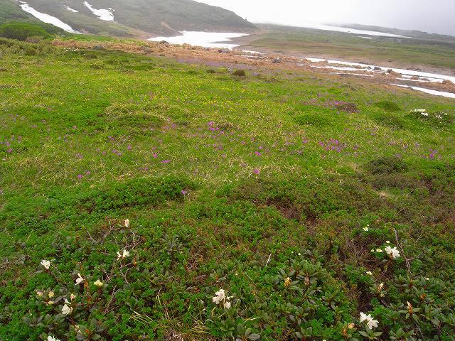 7月8日、旭岳裾合平周辺の花など_f0138096_1324659.jpg