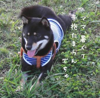 f0068501_1583378.jpg