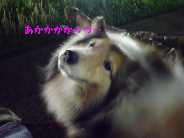 c0159512_041332.jpg