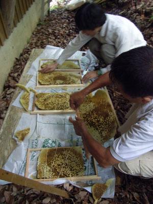 ニホンミツバチの飼育_b0038919_106971.jpg