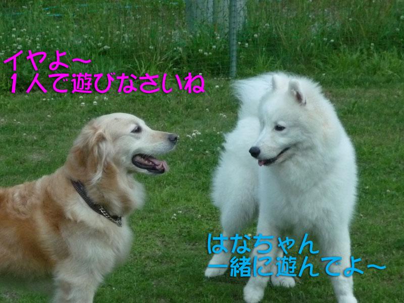 b0146024_0173235.jpg
