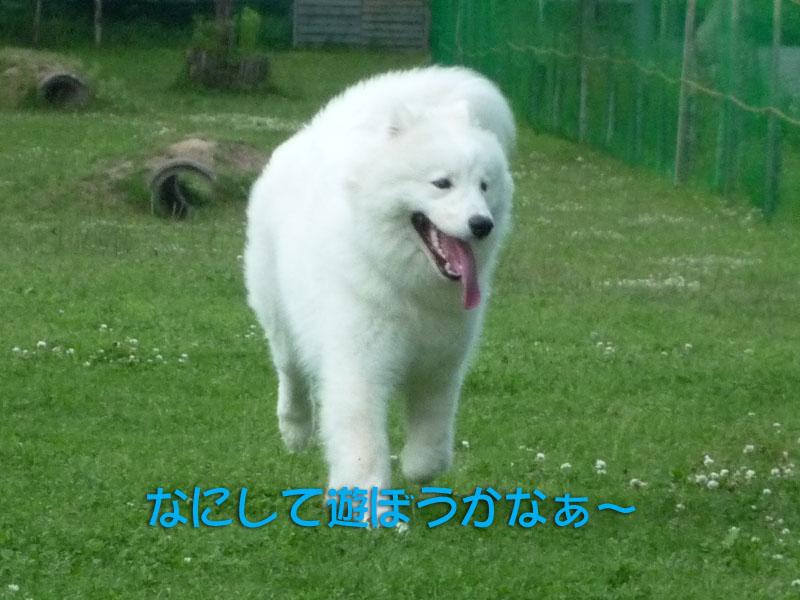 b0146024_0204543.jpg