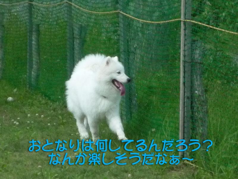 b0146024_0244610.jpg