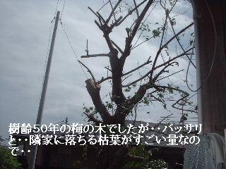 f0031037_18145687.jpg