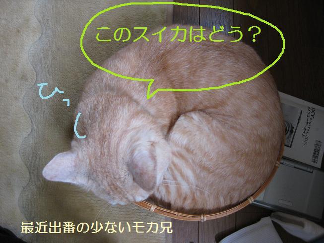 b0151748_10454338.jpg