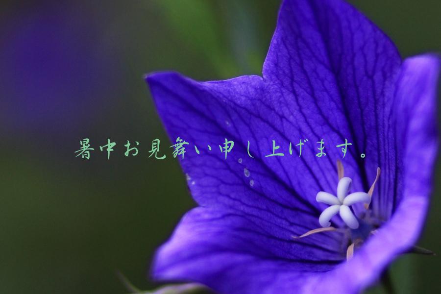 b0157849_001714.jpg