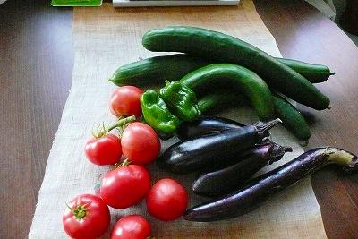 夏野菜と緑のカーテン_c0087349_923629.jpg
