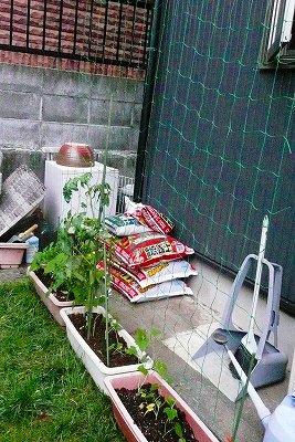 夏野菜と緑のカーテン_c0087349_925760.jpg