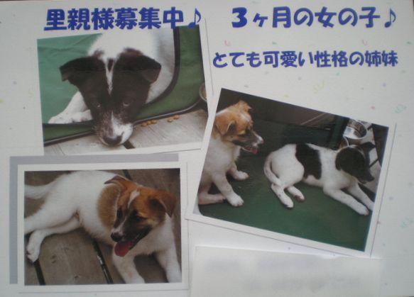 2008年7月14日(月)愛ちゃんの香り!_f0060461_13421994.jpg