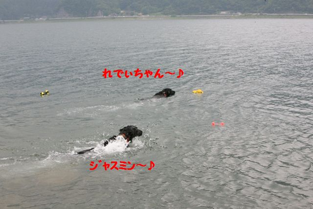 2008 れでぃちゃんとビジューちゃんとの嬉しい出会い❤ _c0134862_22101924.jpg