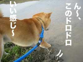 いっちゃんDay_b0057675_1216367.jpg