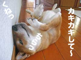 いっちゃんDay_b0057675_1223974.jpg